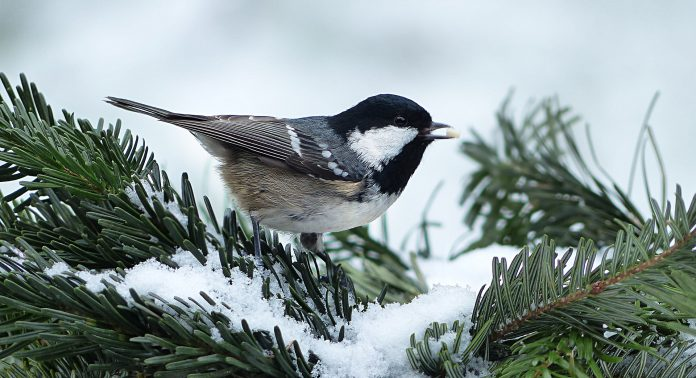Oiseau sur une branche en hiver